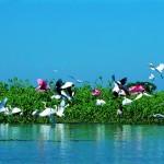 Aves-pantanal-1024x677