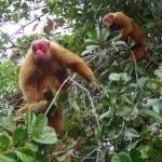 ecopark_Floresta-dos-Macacos-06