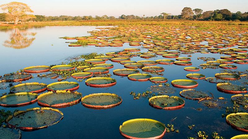 south_pantanal