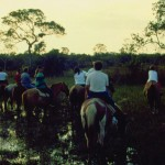 Cavalos_3
