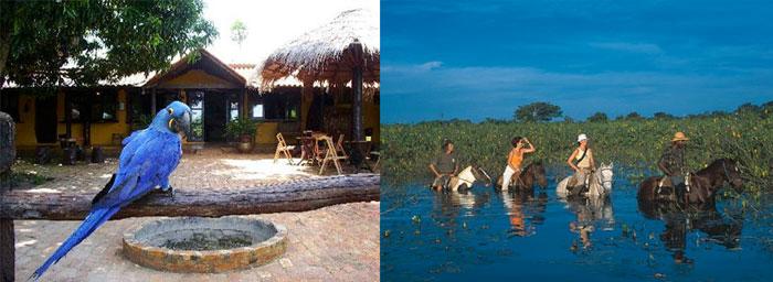 pantanal-araras-package