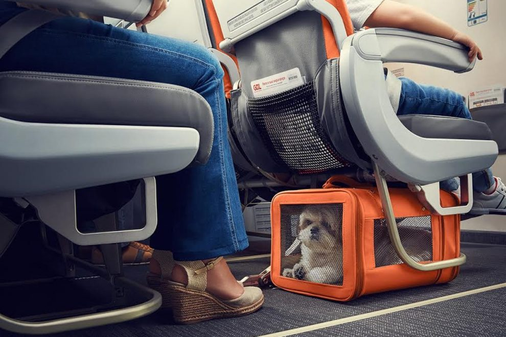 pets, traveling